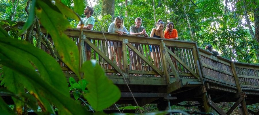Friends on forest bridge inside Daintree Rainforest